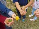 Wild flowers in our school yard Primary School of Zervochoria